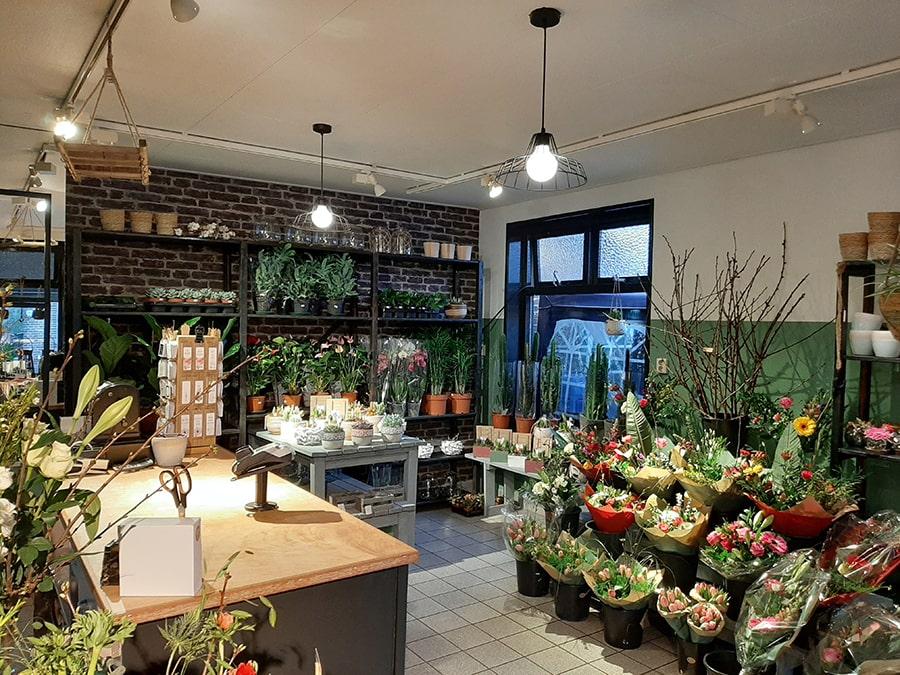 Planten bij Bloemrijk Ruinen